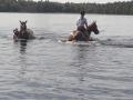 Lato 2019 trwa! Pławimy konie!