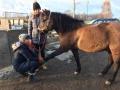 Masaż i stretching koni
