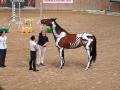 Malowane konie we Wrocławiu