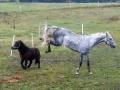 Badanie zachowania koni
