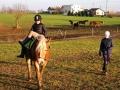 Przerwa świąteczna z końmi