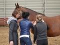 Kurs masażu i strechingu koni