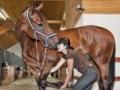Szkolenie z masażu koni - pierwsze na Pomorzu